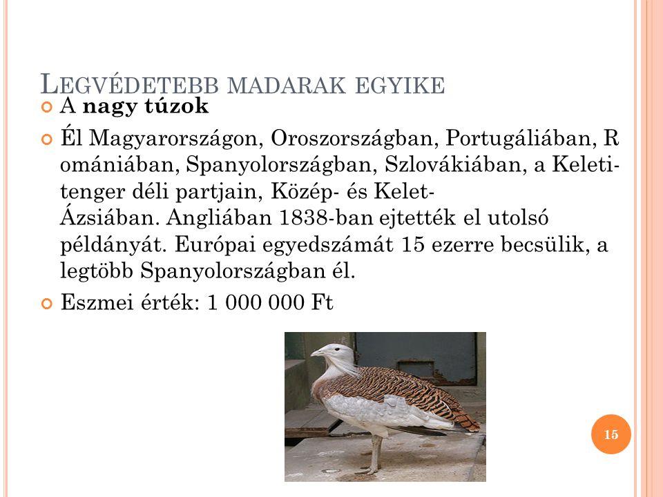 Legvédetebb madarak egyike