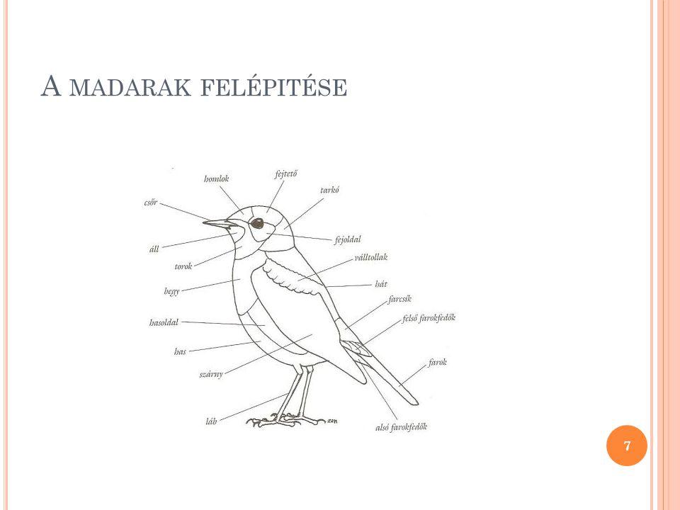 A madarak felépitése