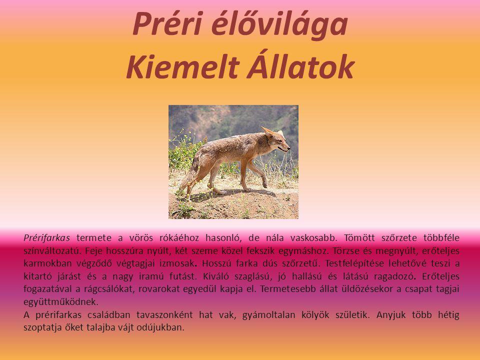 Préri élővilága Kiemelt Állatok