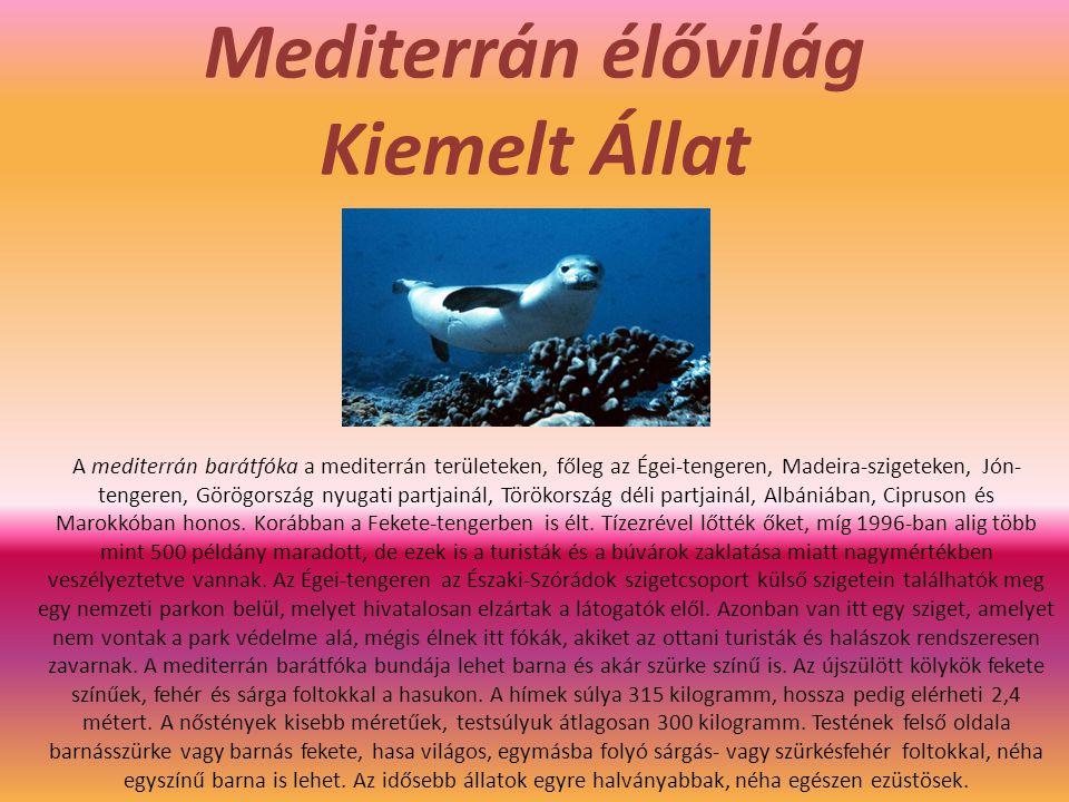 Mediterrán élővilág Kiemelt Állat