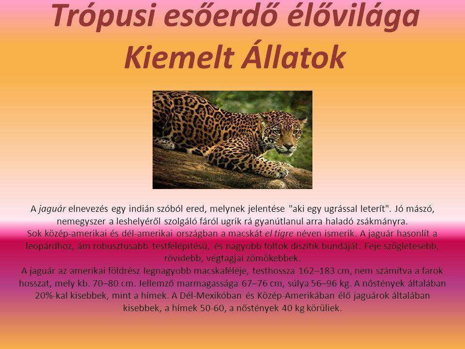 Trópusi esőerdő élővilága Kiemelt Állatok