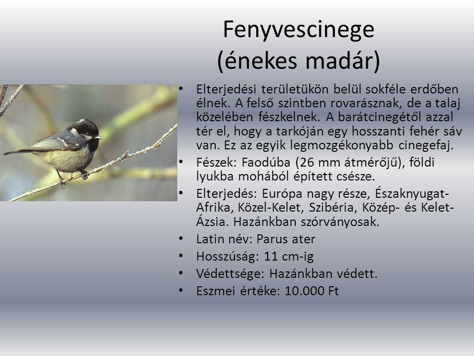 Fenyvescinege (énekes madár)