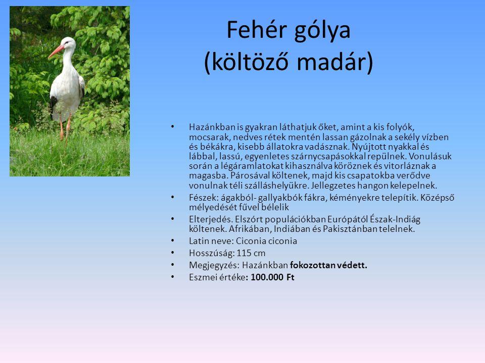 Fehér gólya (költöző madár)