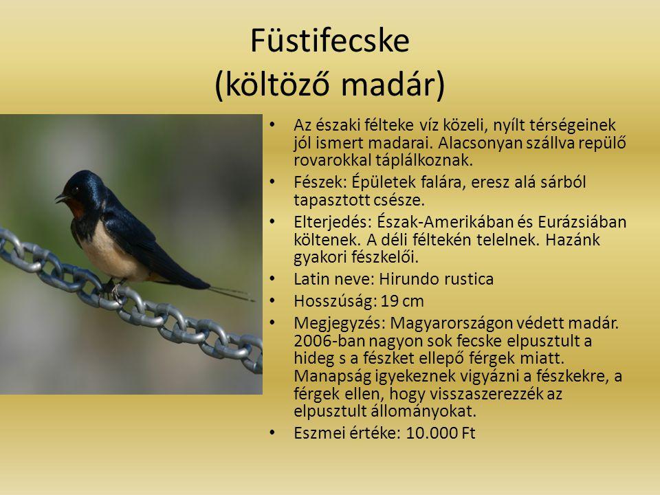 Füstifecske (költöző madár)
