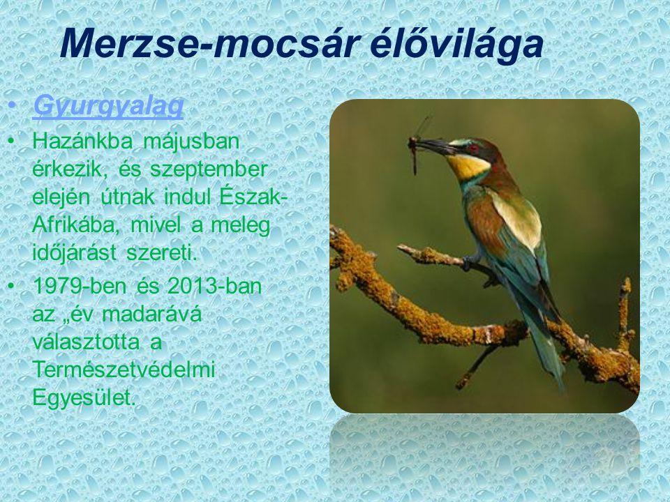 Merzse-mocsár élővilága
