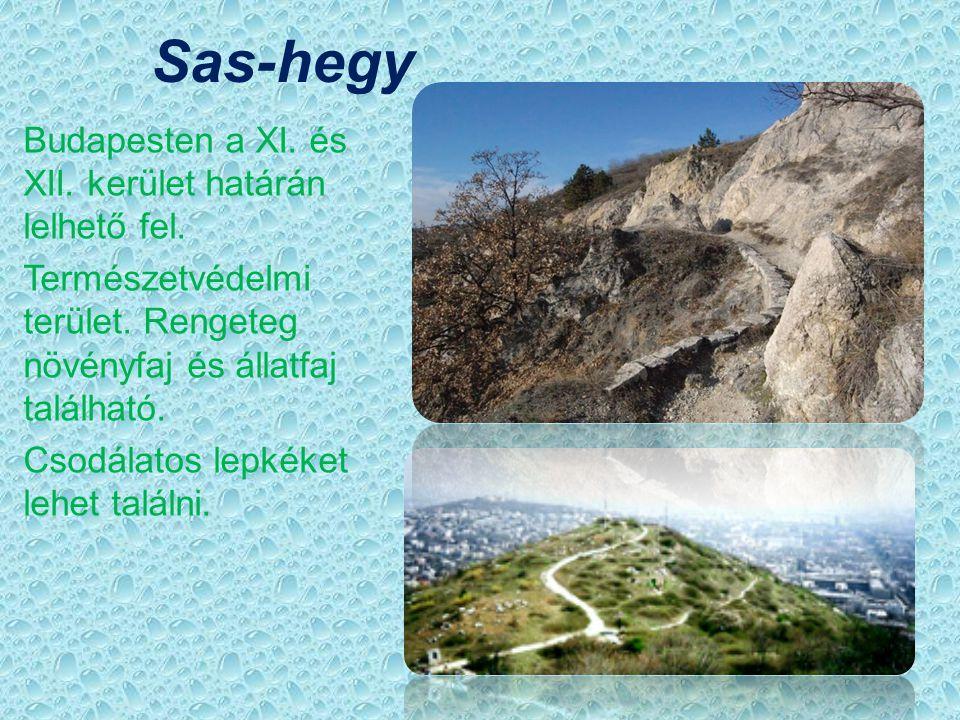 Sas-hegy Budapesten a XI. és XII. kerület határán lelhető fel.