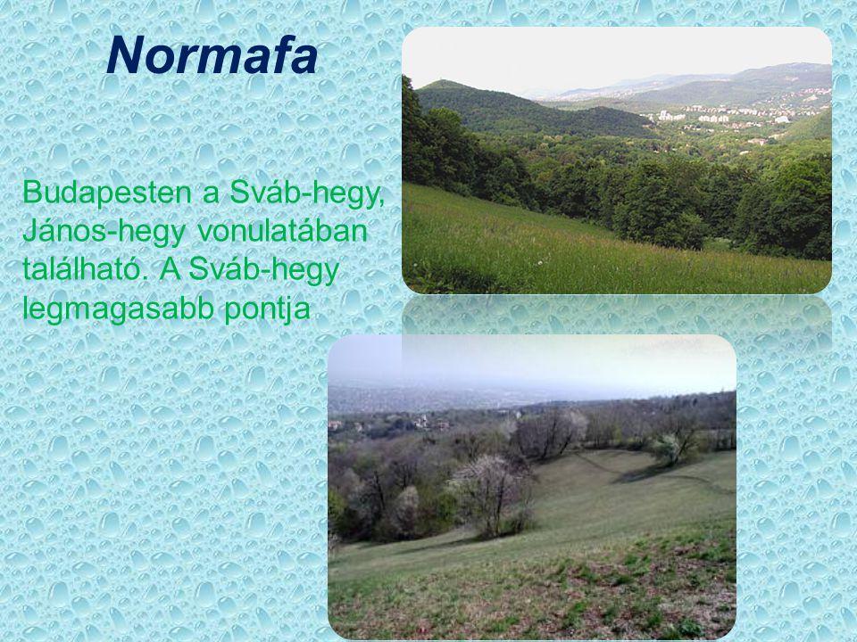 Normafa Budapesten a Sváb-hegy, János-hegy vonulatában található. A Sváb-hegy legmagasabb pontja