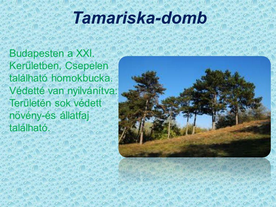 Tamariska-domb Budapesten a XXI. Kerületben, Csepelen található homokbucka. Védetté van nyilvánítva: