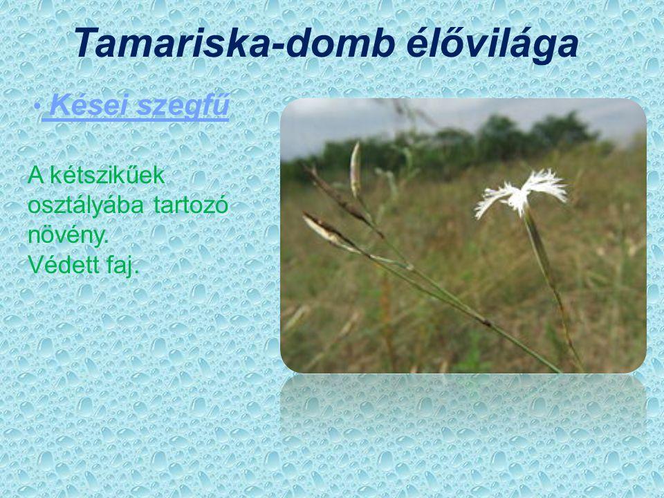 Tamariska-domb élővilága