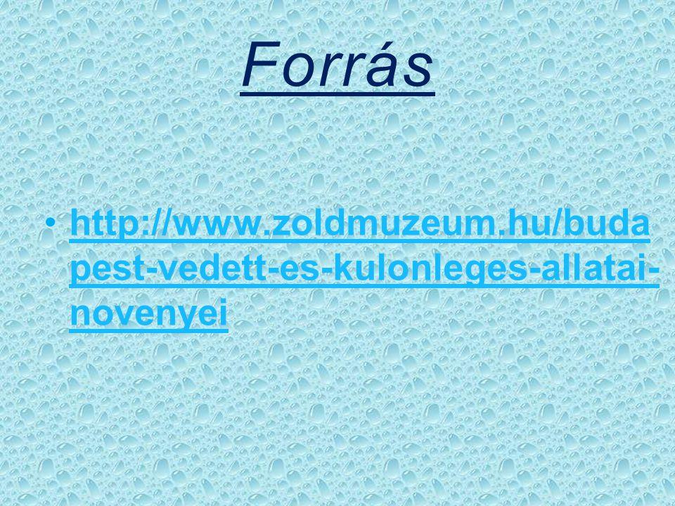 Forrás http://www.zoldmuzeum.hu/budapest-vedett-es-kulonleges-allatai-novenyei
