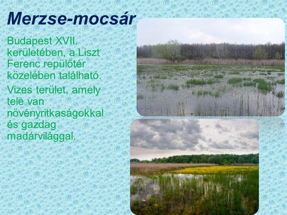 Merzse-mocsár Budapest XVII. kerületében, a Liszt Ferenc repülőtér közelében található.