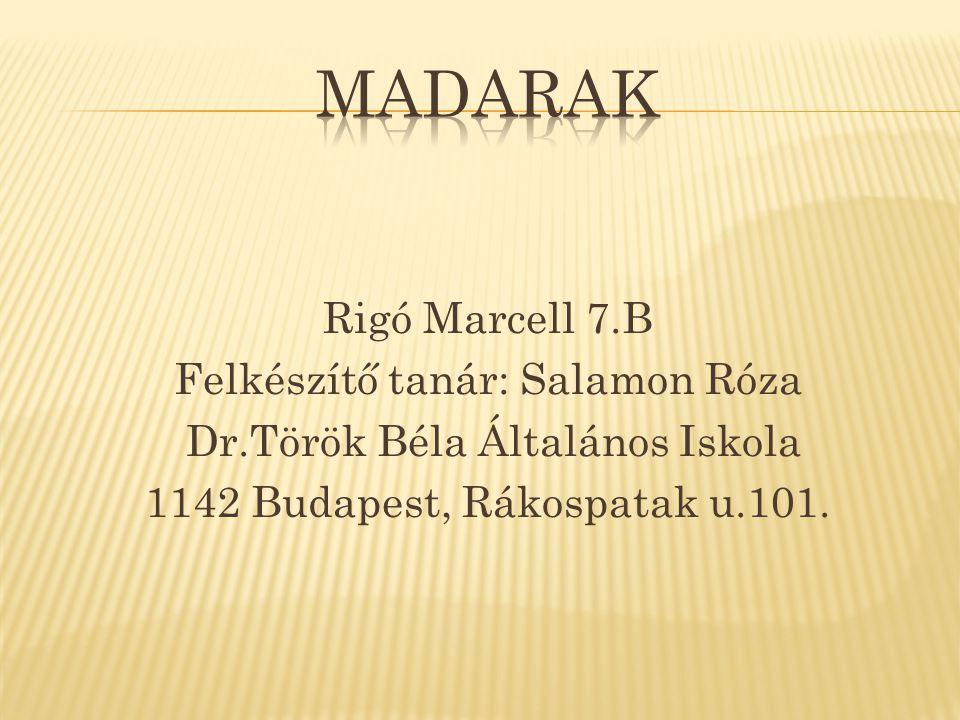 madarak Rigó Marcell 7.B Felkészítő tanár: Salamon Róza Dr.Török Béla Általános Iskola 1142 Budapest, Rákospatak u.101.