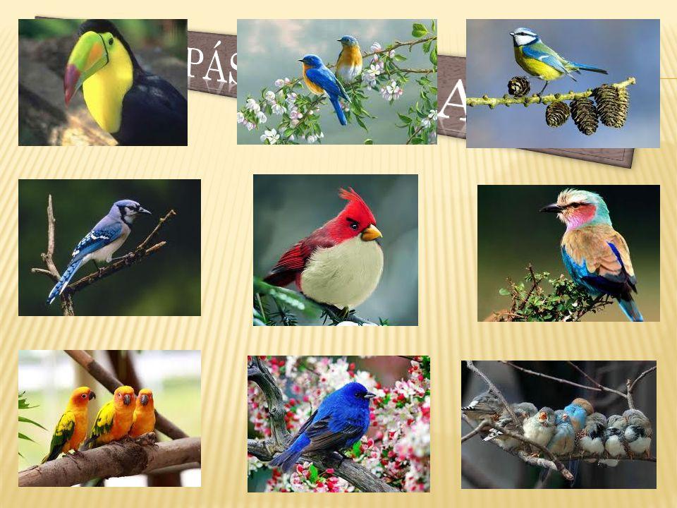 Színpompás madarak