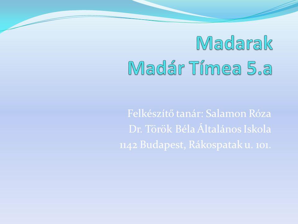 Madarak Madár Tímea 5.a Felkészítő tanár: Salamon Róza