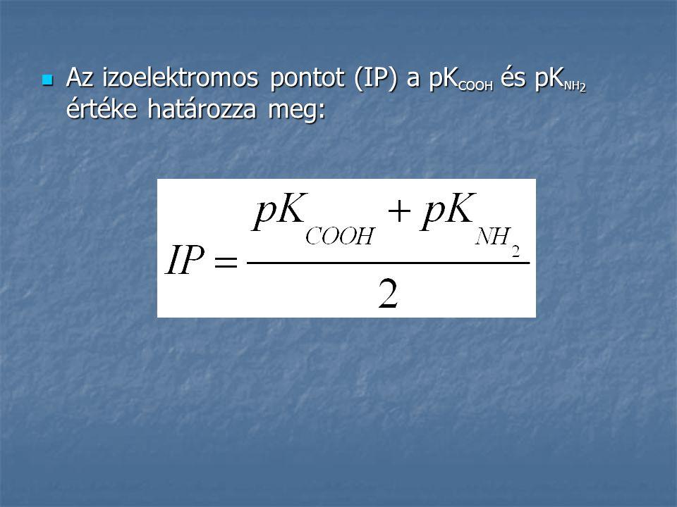 Az izoelektromos pontot (IP) a pKCOOH és pKNH2 értéke határozza meg: