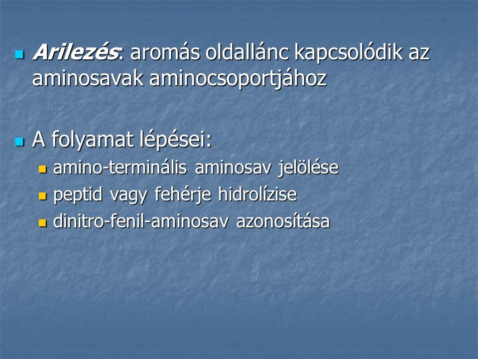 Arilezés: aromás oldallánc kapcsolódik az aminosavak aminocsoportjához