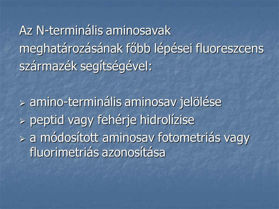 Az N-terminális aminosavak