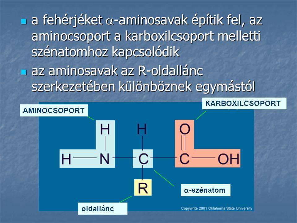 az aminosavak az R-oldallánc szerkezetében különböznek egymástól