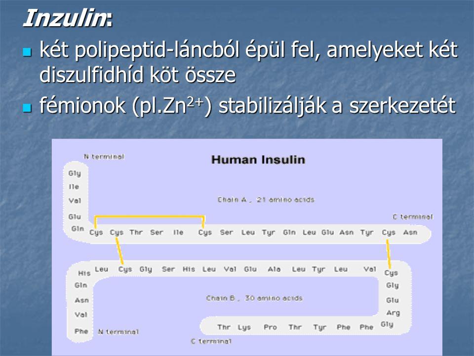 Inzulin: két polipeptid-láncból épül fel, amelyeket két diszulfidhíd köt össze.