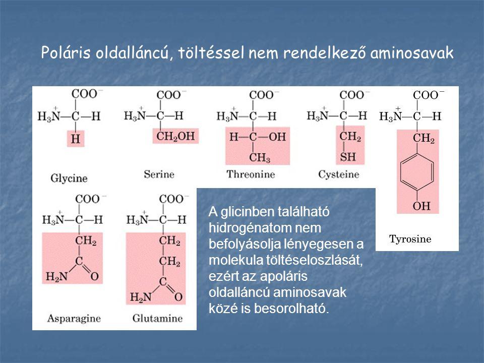 Poláris oldalláncú, töltéssel nem rendelkező aminosavak