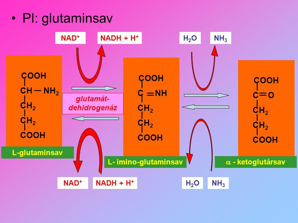 glutamát-dehidrogenáz