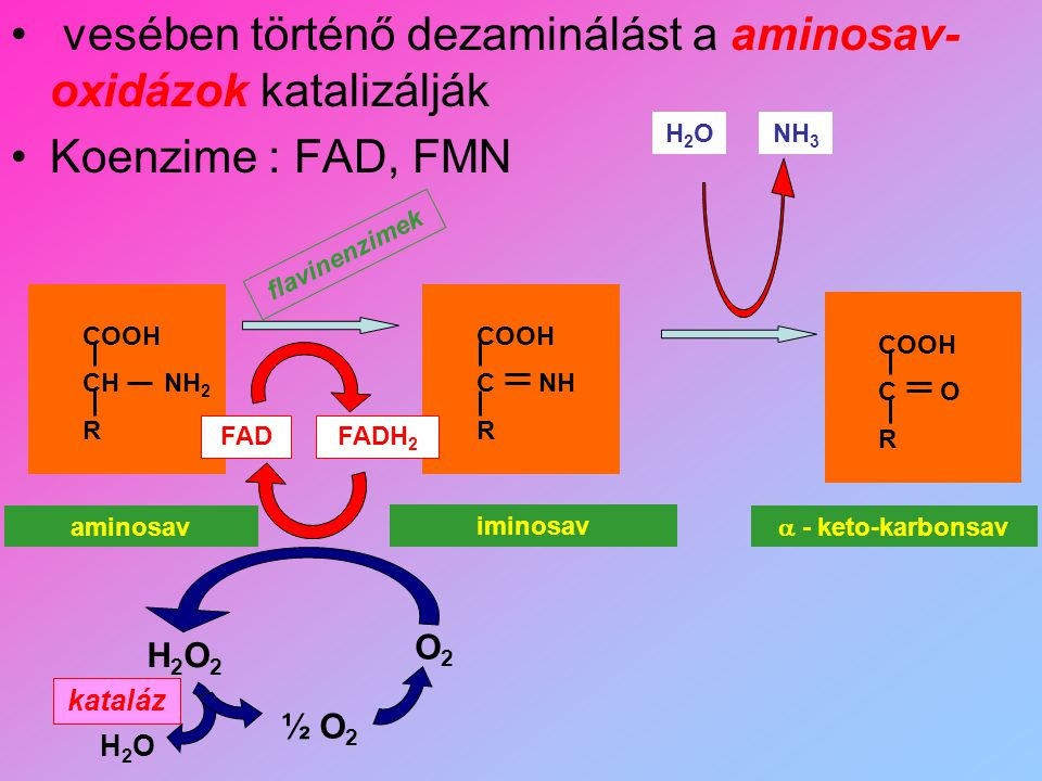 vesében történő dezaminálást a aminosav-oxidázok katalizálják