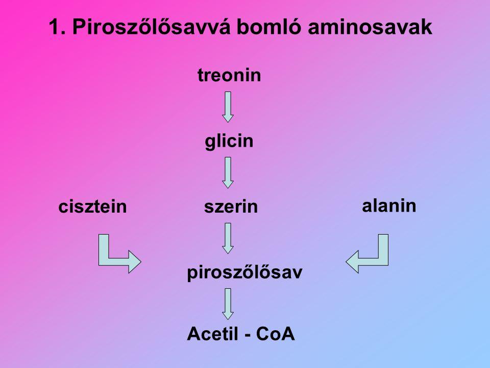 1. Piroszőlősavvá bomló aminosavak