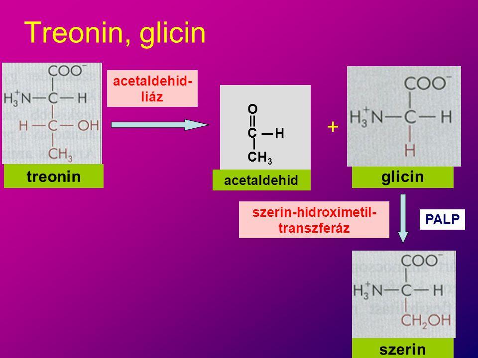 szerin-hidroximetil-transzferáz