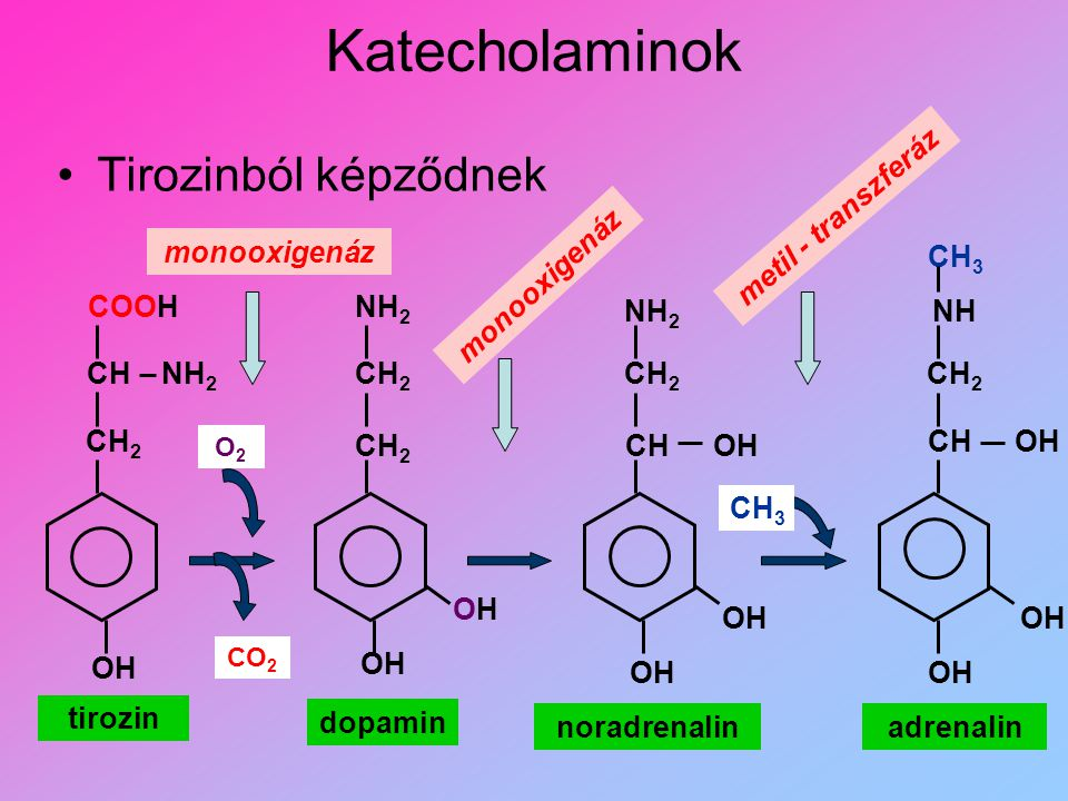 Katecholaminok Tirozinból képződnek metil - transzferáz monooxigenáz