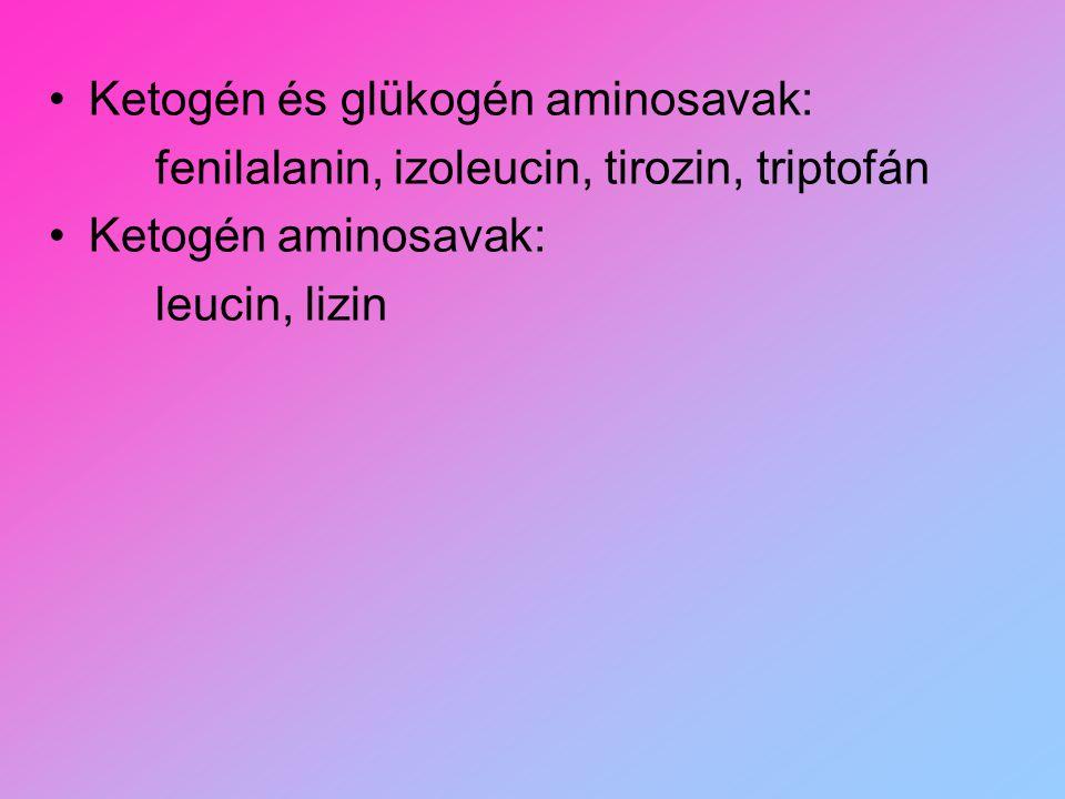 Ketogén és glükogén aminosavak: