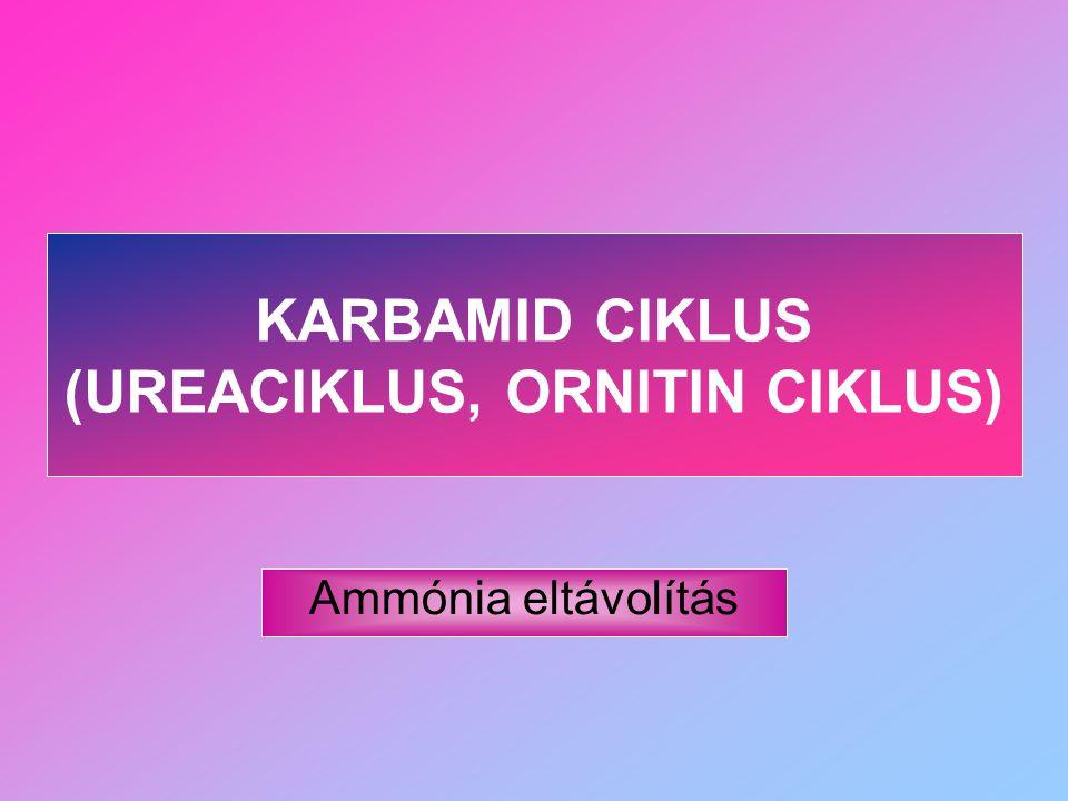 KARBAMID CIKLUS (UREACIKLUS, ORNITIN CIKLUS)