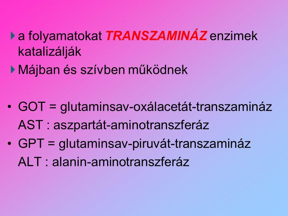a folyamatokat TRANSZAMINÁZ enzimek katalizálják