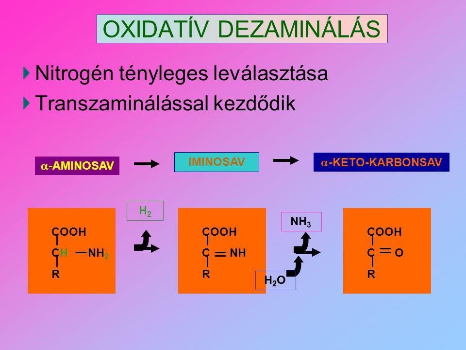 OXIDATÍV DEZAMINÁLÁS Nitrogén tényleges leválasztása