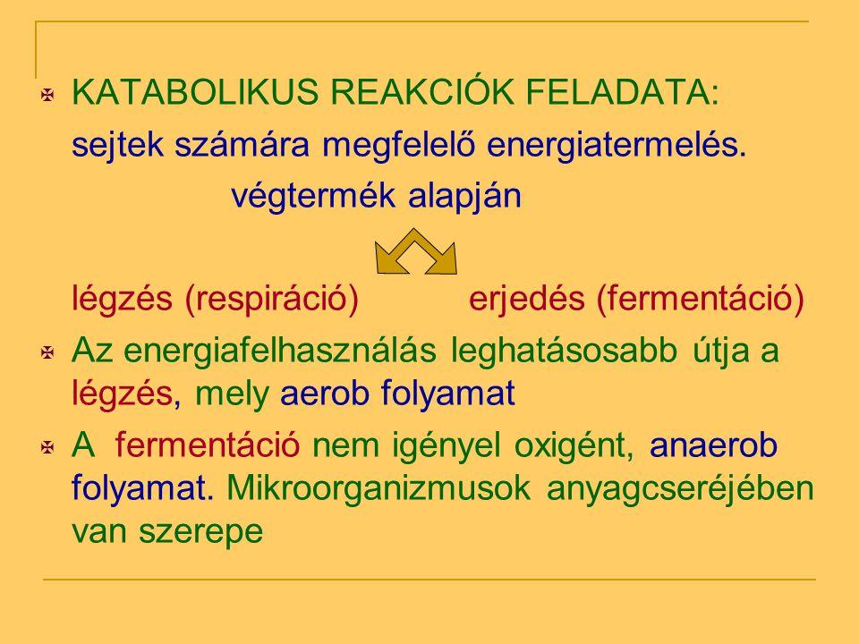 KATABOLIKUS REAKCIÓK FELADATA: