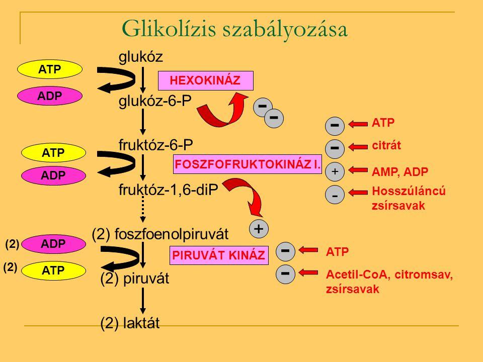Glikolízis szabályozása