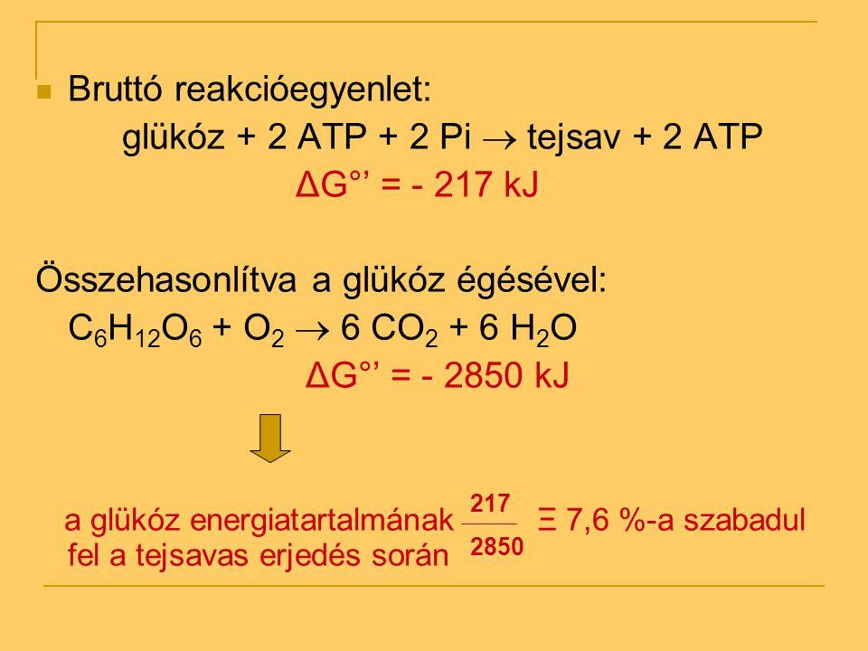 Bruttó reakcióegyenlet: glükóz + 2 ATP + 2 Pi  tejsav + 2 ATP