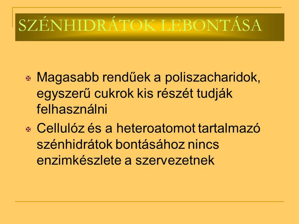 SZÉNHIDRÁTOK LEBONTÁSA