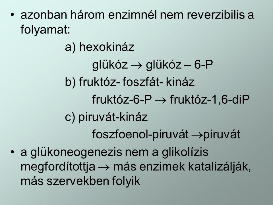 azonban három enzimnél nem reverzibilis a folyamat: