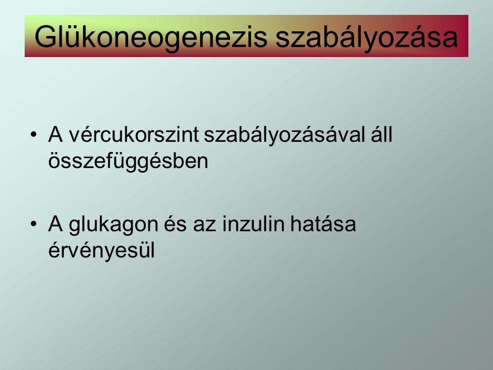 Glükoneogenezis szabályozása
