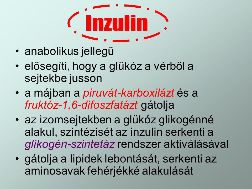 Inzulin anabolikus jellegű
