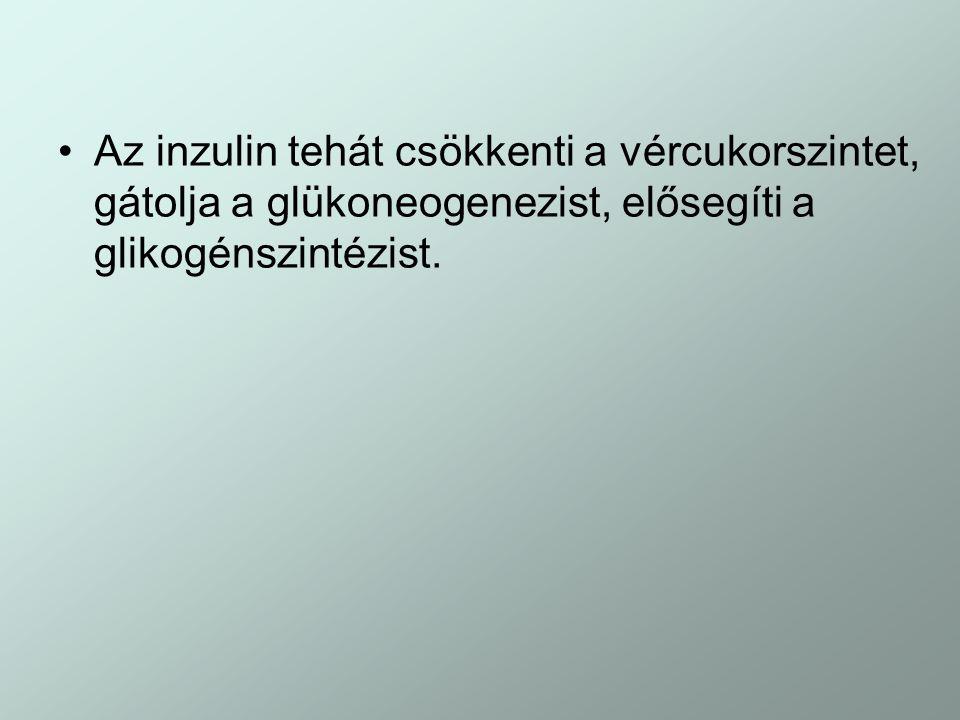 Az inzulin tehát csökkenti a vércukorszintet, gátolja a glükoneogenezist, elősegíti a glikogénszintézist.