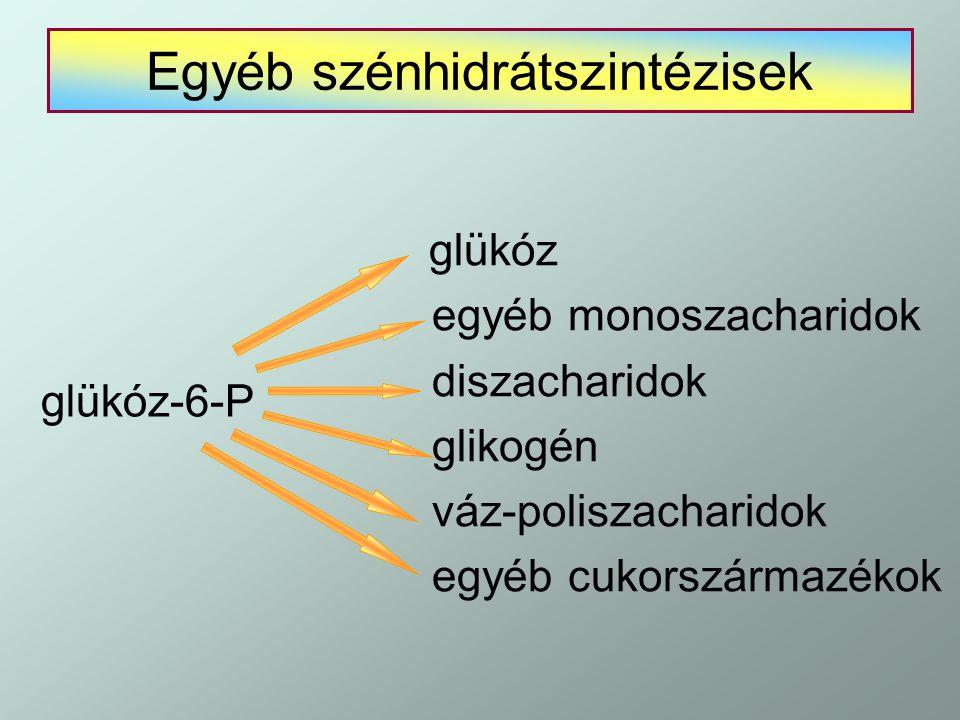 Egyéb szénhidrátszintézisek