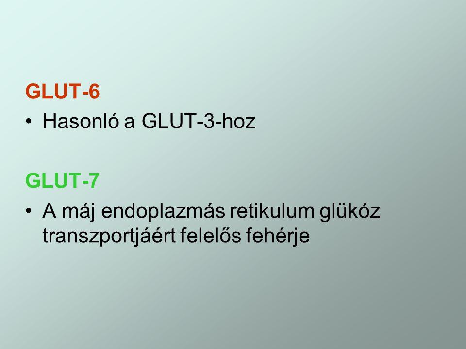 GLUT-6 Hasonló a GLUT-3-hoz. GLUT-7.