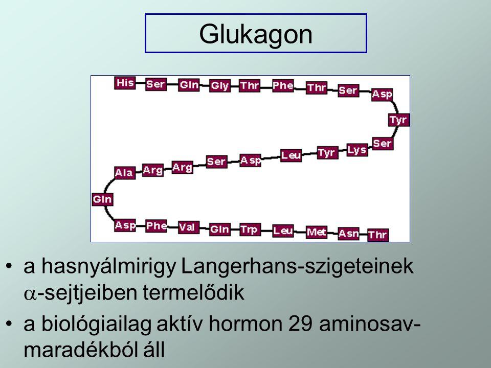 Glukagon a hasnyálmirigy Langerhans-szigeteinek -sejtjeiben termelődik.