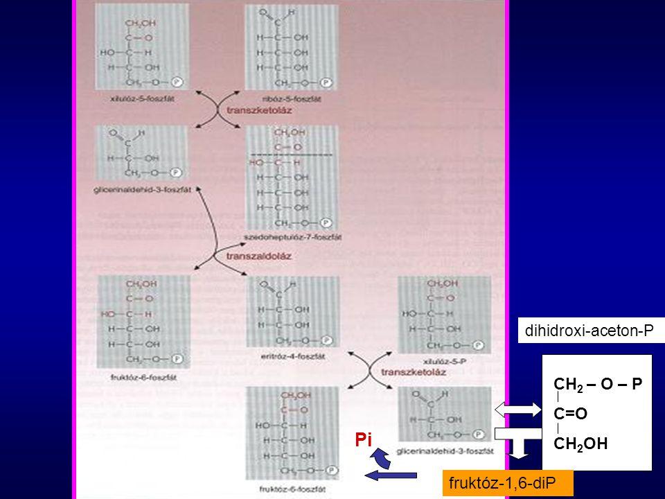 dihidroxi-aceton-P CH2 – O – P C=O CH2OH Pi fruktóz-1,6-diP