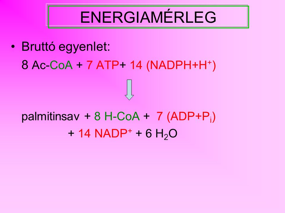 ENERGIAMÉRLEG Bruttó egyenlet: 8 Ac-CoA + 7 ATP+ 14 (NADPH+H+)