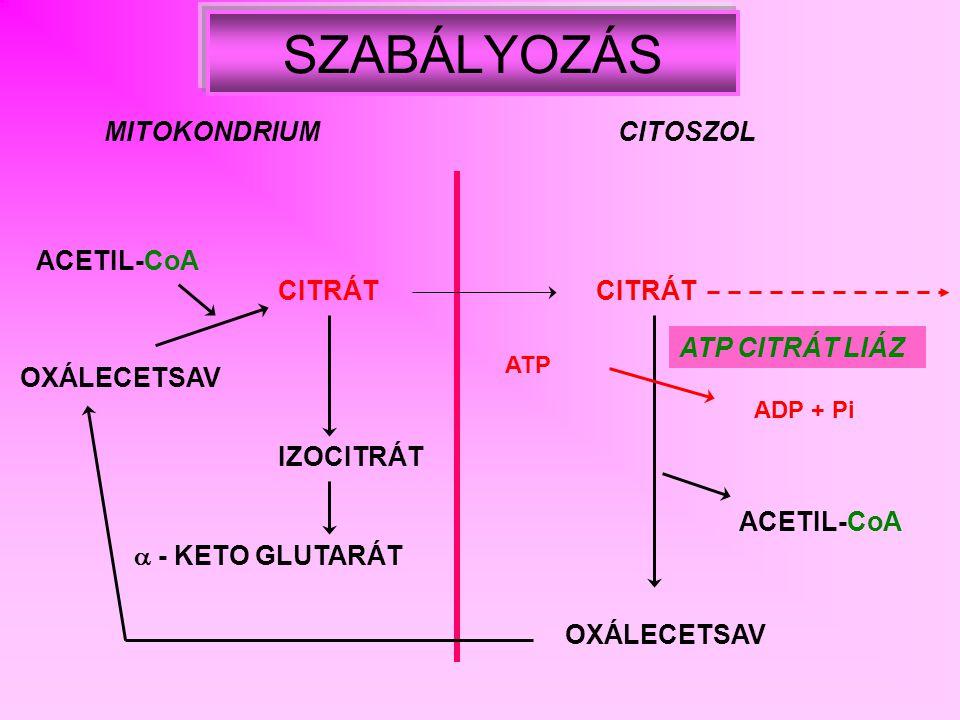 SZABÁLYOZÁS MITOKONDRIUM CITOSZOL ACETIL-CoA CITRÁT CITRÁT