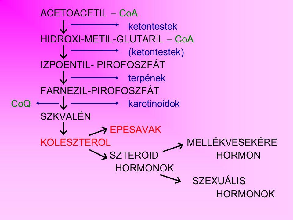 ACETOACETIL – CoA ketontestek. HIDROXI-METIL-GLUTARIL – CoA. (ketontestek) IZPOENTIL- PIROFOSZFÁT.