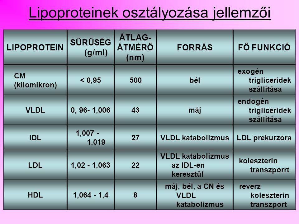 Lipoproteinek osztályozása jellemzői