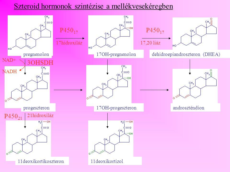 Szteroid hormonok szintézise a mellékvesekéregben